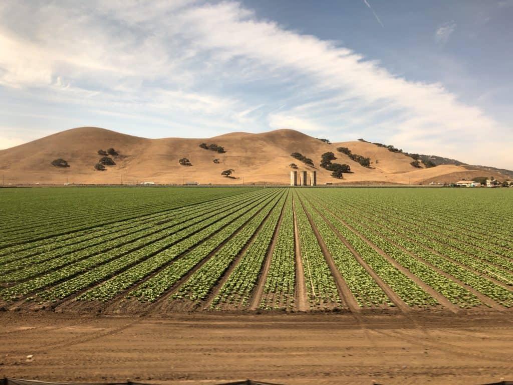 Gilroy, CA Garlic Fields From Amtrak Coast Starlight